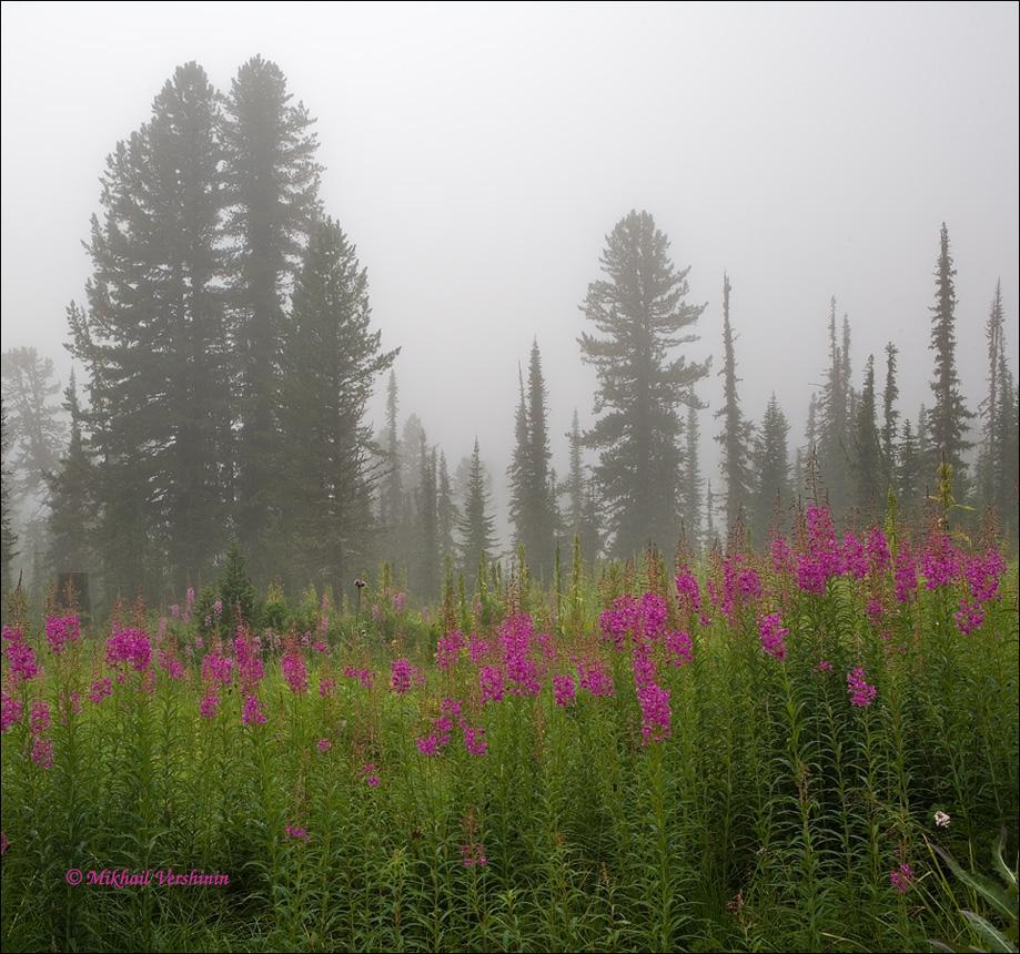 за туманом и за запахом тайги слушать