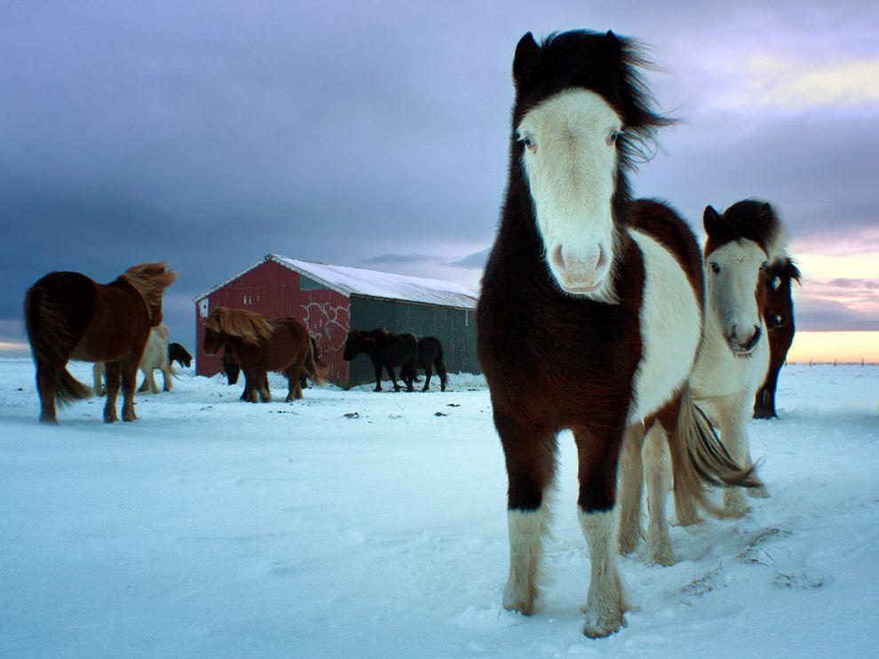 153 Обои для рабочего стола от National Geographic за январь 2012