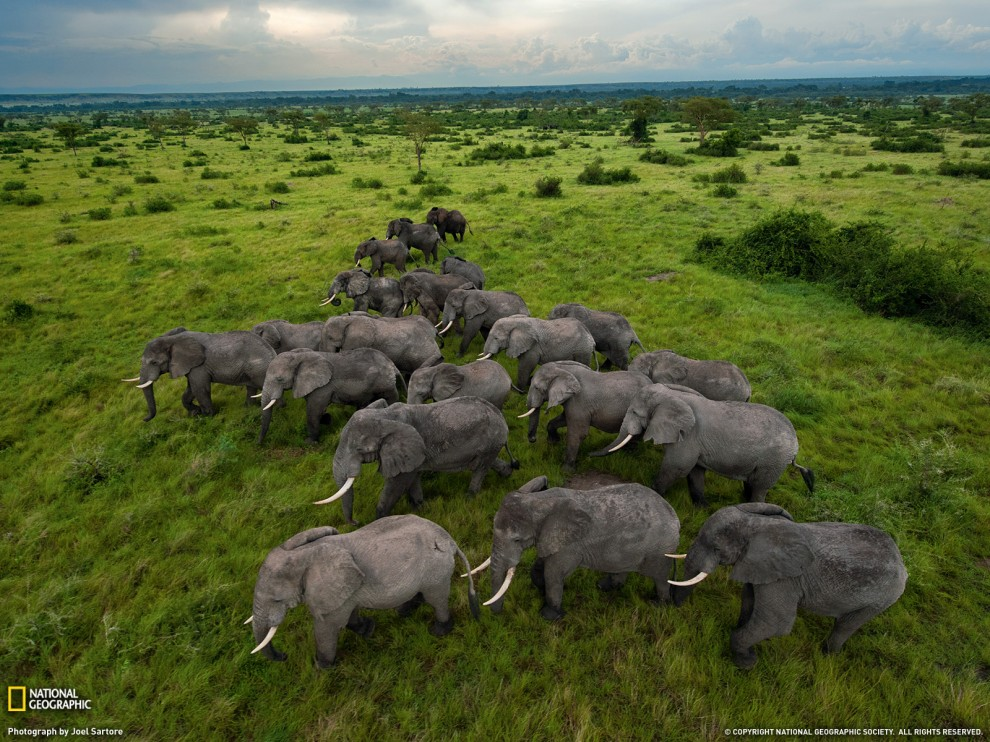 182 990x742 Обои для рабочего стола от National Geographic за январь 2012