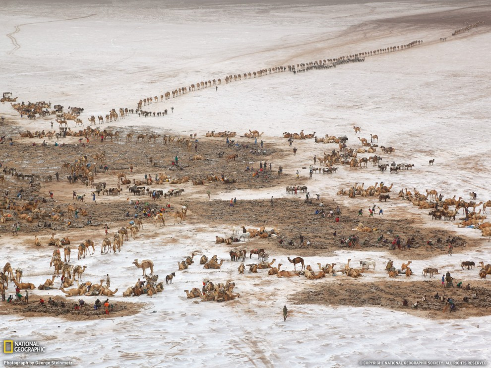 292 990x742 Обои для рабочего стола от National Geographic за январь 2012