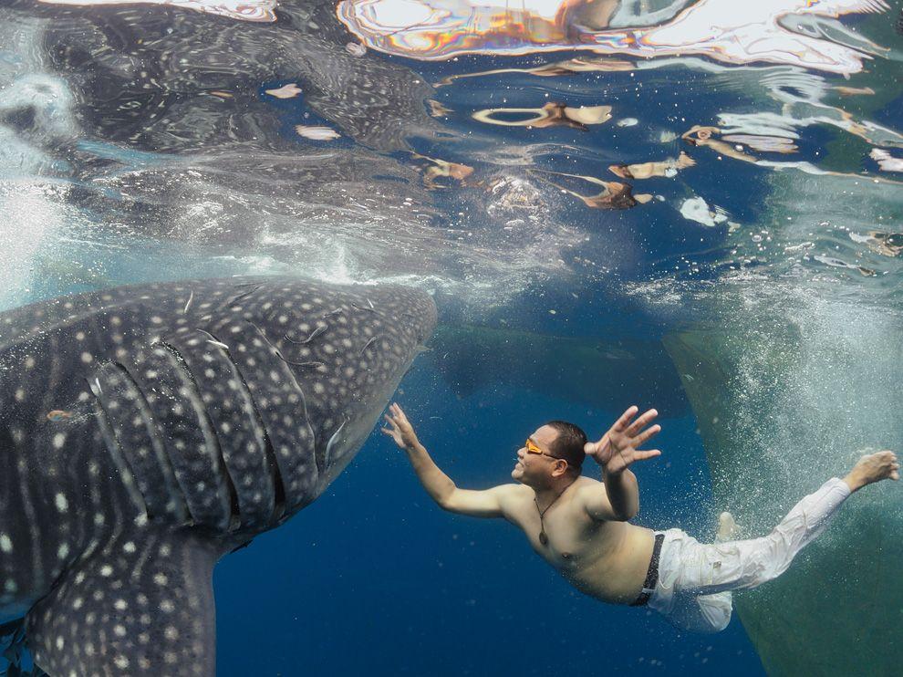 2 Обои для рабочего стола от National Geographic за февраль 2012