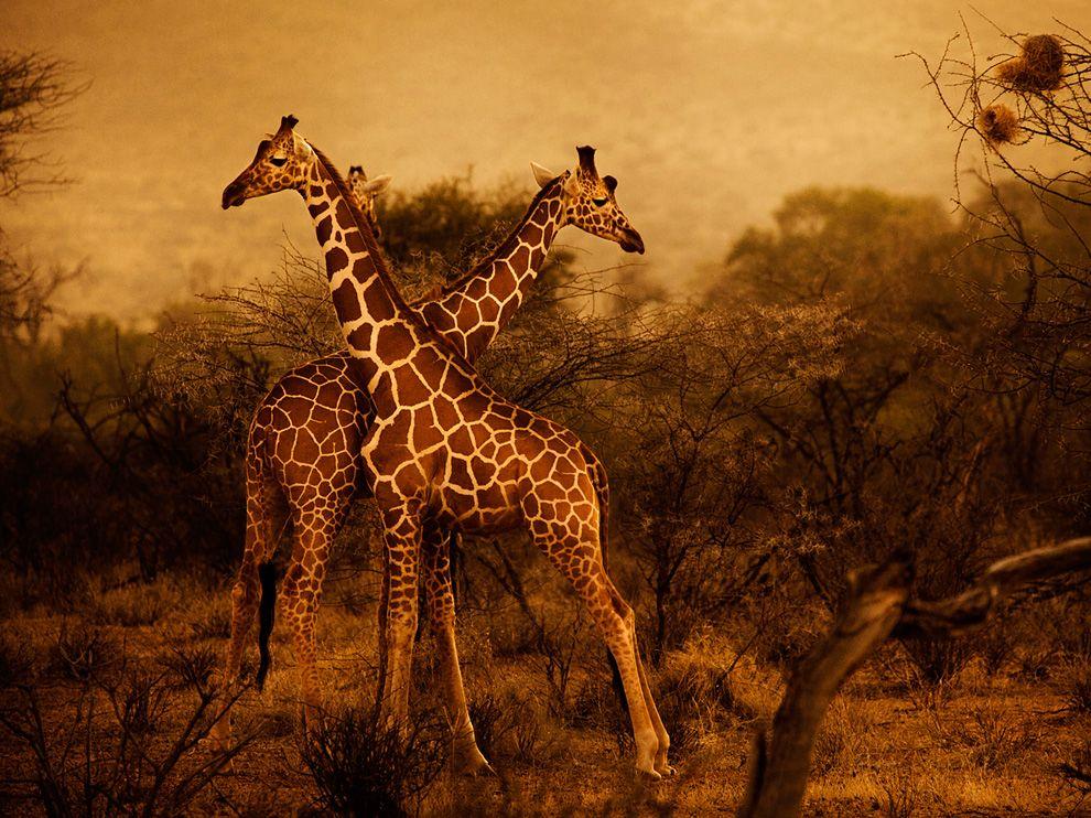 19 Обои для рабочего стола от National Geographic за февраль 2012