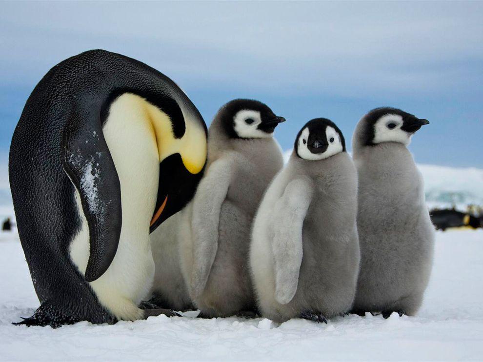 20 Обои для рабочего стола от National Geographic за февраль 2012