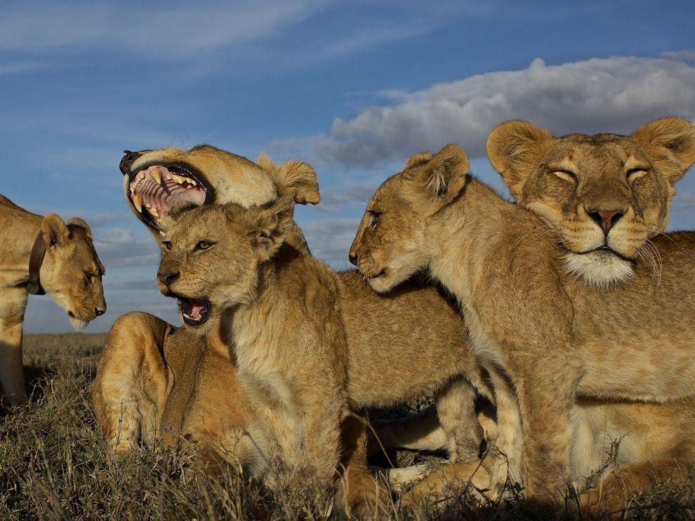 21 Обои для рабочего стола от National Geographic за февраль 2012