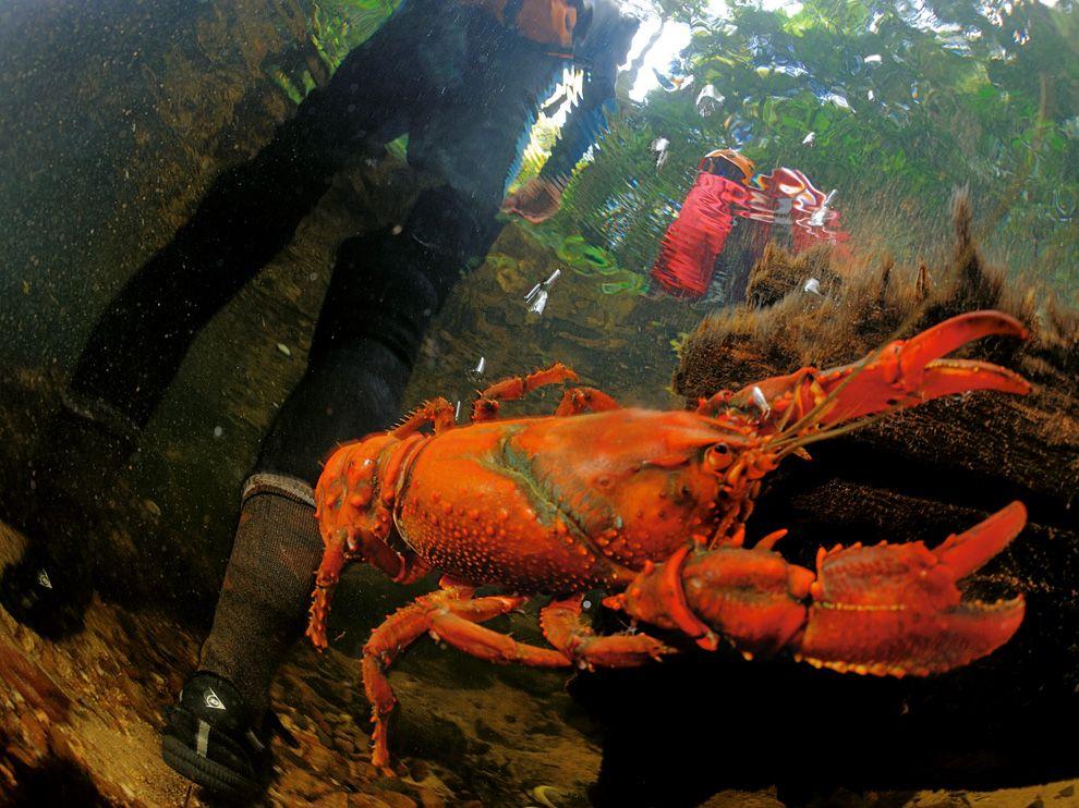 5 Обои для рабочего стола от National Geographic за февраль 2012