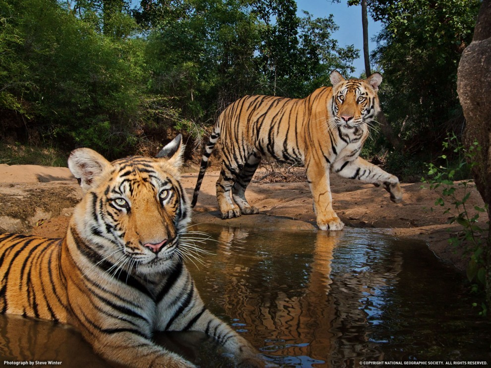 6 990x742 Обои для рабочего стола от National Geographic за февраль 2012