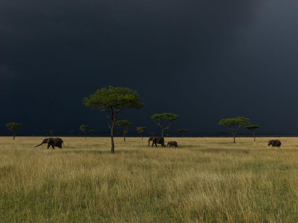 7 Обои для рабочего стола от National Geographic за февраль 2012