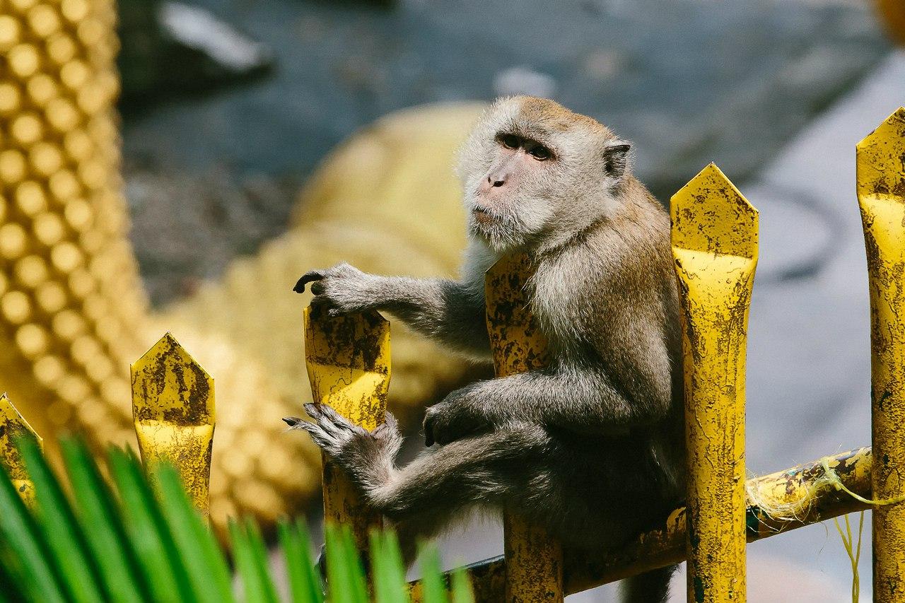 обезьяны и вода картинки этого