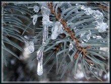 А зима не сдается... / использовал режим макро и постарался замереть (штатив не всегда с собой ношу)