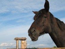 Horse / Smile