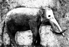 сон про слона / приснилось