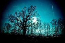 Без названия / природа, самолет, дерево