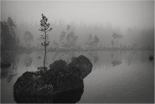 Загадки природы, или ЕДИНСТВО МОЛОДОСТИ и ВЕЧНОСТИ / Маленькое деревце на данной фотографии олицетворяет МОЛОДОСТЬ, а камень - вечность. Но в одиночестве они ЕДИНЫ. Всем приятного просмотра!