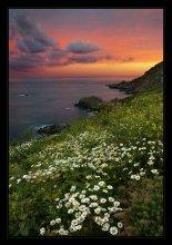 Saints Bay / Guernsey(Нормандскиe островa, UK), начало июня, все склоны прибрежных скал покрыты ромашками. Пейзажи Guernsey в слайд шоу: http://www.youtube.com/watch?v=zdWgP9_VnPw