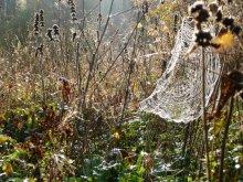 Из жизни паутин / Это поздний сентябрь, довольно в том году теплый и сухой. Фотоаппарат Panasonic DMC-TZ3