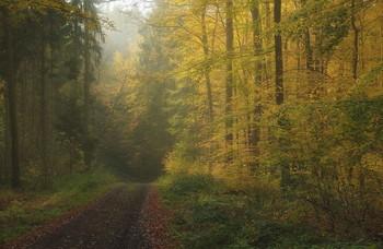 Осеннее утро. / Туманное утро в осеннем лесу.