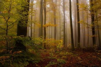 Уходящая осень / Осенний лес в ноябре .