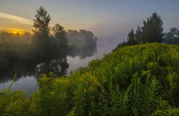 Летний пейзаж с золотарником / Россия. Тульская область. Ясногорский район. Большие Байдики.