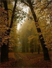 Немного про осень / Осень 2008
