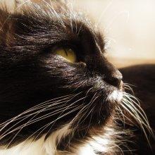 Кошка / если черный кот...