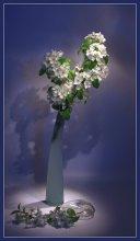 Весенний цвет / ночь, комната, фонарь, штатифф... :)