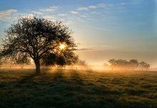Утро в яблоневом саду. / .......