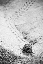 Дорогу осилит идущий / пляж,Ашдод