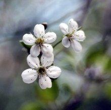 Весна / ------