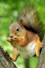 Время перекусить / Чтобы семечки не отобрали, белка забралась на дерево чуть выше.  P.S. С полтинником белочек оказалось снимать удобнее чем с телевиком (не нужно от них далеко отбегать :) )