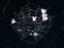 в сети / все мы когда-то попадаем в сеть: только кто-то в сети к пауку, а кто-то в сети любви
