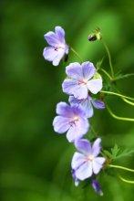 просто цветы / .....