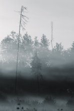 lost in the fog / *********