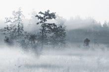 fog / **********