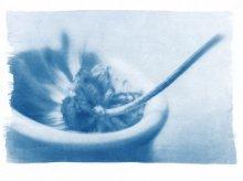 Каллиграфу / цианотипный отпечаток