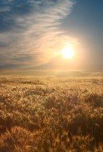 новый теплый день) / раннее утро, сегодня