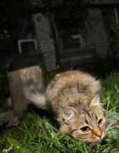 Кошка=белка / Ночной хищник