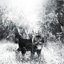 Солнечный кот / котяфотя