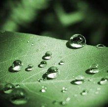после дождя / raindrops