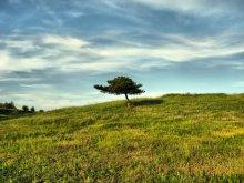 Alone Tree / Alone Tree