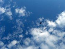 Свобода / все мы свободные как птицы... летим, хотим стремительно упасть...