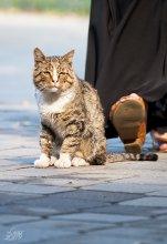 Уууупс! =) / не легко живётся бездомным котам...