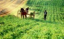 Косьба... / одно из самых почетных занятий в нашей стране, наряду с посевной и уборочной...