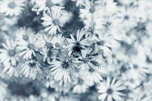 A Little Bee Dream's / *****