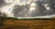 Белорусские равнины / Такую картину я застал путешествуя в верх по реке Вилия. Сморгонский район. Пастух перегонял стадо барашков на другое поле. Приятного просмотра