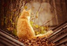 #102. Провожая осень / Осенний кот.