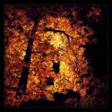 Огненное дерево / Возвращаясь домой с прогулки заметил странное свечение...