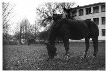лошадки / fuji supreia 200