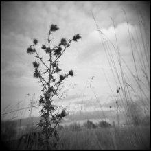 Она / Kodak 120mm black and white, 320.