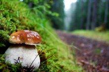 Без названия / белый гриб