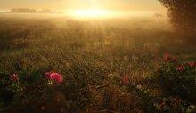 Утро на лугу / Цветной сон на летнюю тему.... Приятного Всем просмотра  :)